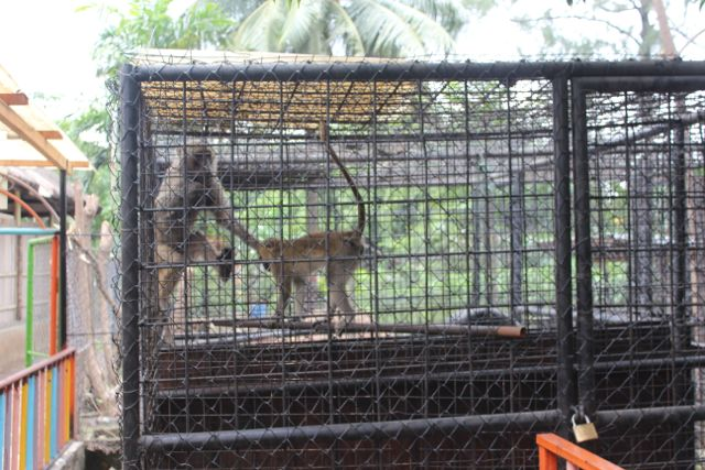 We saw monkeys. There were several species and most of the cages were labeled which I liked