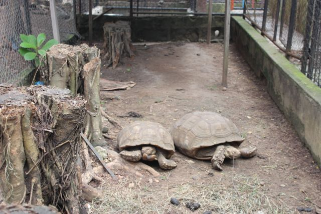 We also saw turtles. They were also in a cage. Wait are these turtles or tortoise? I don't remember.